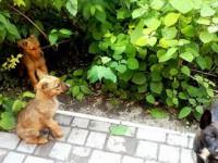 В Запорожье отравили щенков