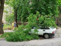 В центре Запорожья очередное дерево придавило легковушку (Фото)