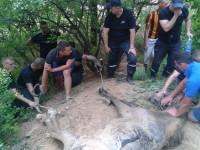 На Бабурке развернули спецоперацию по спасению лошади
