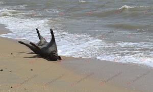 В Запорожской области на берег моря выбросило труп дикого животного