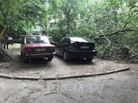 В Запорожской области огромное дерево придавило два авто (Фото)