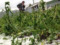 В Запорожской области из-за капризов погоды под угрозой гибели оказался урожай