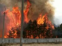 В Запорожской области горящий лес тушили более 40 спасателей