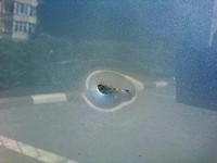 В Запорожье забросали камнями авто журналиста новостного сайта (Фото)
