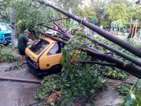 На Бабурке дерево рухнуло на автомобиль (Фото)