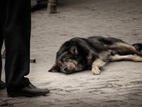 В Запорожской области жестоко расправляются с  бездомными животными