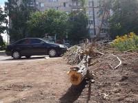 Жительнице Запорожской области на голову упала огромная ветка (Фото)