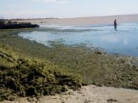 Нашествие водорослей в Кирилловке: специалисты назвали причины