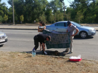 На запорожской Набережной патрульные спасли сбитую машиной собаку