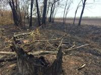 У фермера из Запорожской области сгорел миллионный урожай