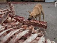 В запорожском приюте нечем кормить собак
