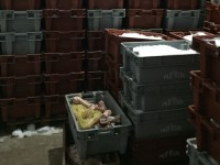 На запорожском курорте обнаружили незаконный цех с десятками тонн мороженой рыбы