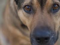 В Запорожской области бойцовский пес не подпускал к хозяину медиков