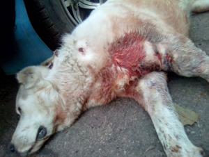 Житель Запорожской области жестоко расстрелял собаку
