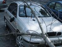 В Запорожской области ветка повредила авто вокалиста музыкальной группы