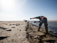 Брыль назвал массовый мор рыбы на Молочном лимане природным явлением