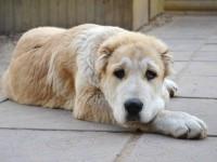 На запорожском курорте собака сбежала от владельца прямо с выставки