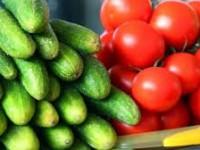 В запорожском селе откроют уникальное предприятие по поставке овощей в Европу