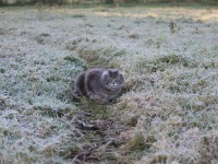 В Запорожье к концу недели прогнозируют заморозки