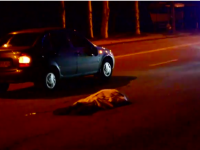В Хортицком районе Запорожья насмерть сбили мужчину (Видео)