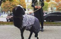 Владелец грузинского ресторана прокомментировал акцию с бараном, возмутившую зоозащитников