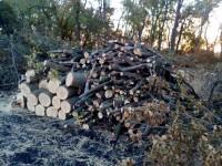 В Запорожской области задержали банду, незаконно вырубившую деревьев на несколько миллионов