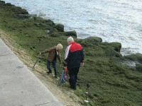 На берег Азовского моря в Запорожской области выбросило тонны водорослей (Фото)