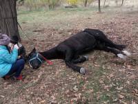 На Хортице конь упал от обезвоживания (Фото)