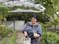 В Запорожской области выращивают гранаты и инжир