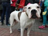 «Скажем за тех, кто сам не может»: в Запорожье состоялся марш за права животных