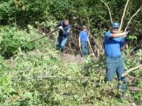 Ради нового парка на запорожской Набережной срубят почти полтысячи деревьев