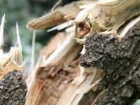 На запорожской трассе дерево упало на проезжающий автомобиль