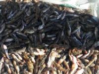В Запорожской области словили браконьеров с несколькими сотнями метров сетей