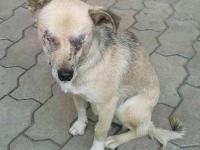 Собака, которую живодеры лишили глаз, обрела дом