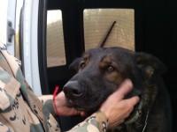 Ветеринар рассказала трогательную поисков пса погибшего в аварии кинолога