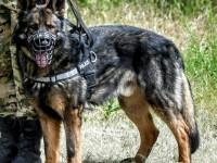 Служебный пес вернулся на место гибели полицейского-кинолога