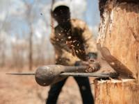 В Запорожской области «черных лесорубов» освободили даже от штрафа