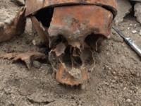 Возле запорожского собора нашли человеческий скелет (Фото)