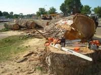 Нет топлива: в Запорожье перестали вывозить сносить и вывозить спиленные деревья