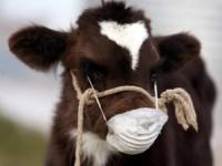 В Запорожской области зафиксировали вспышку бешенства у коров