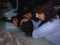 На центральном рынке Запорожья травят собак