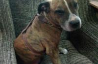 Запорожец увидел свою пропавшую собаку по телевизору