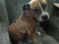Запорожские патрульные ищут владельцев потерявшегося пса