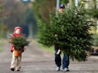 Праздник приближается: запорожские лесники назвали цены на новогодние елки
