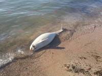 На берегу запорожского курорта обнаружили труп редкого животного