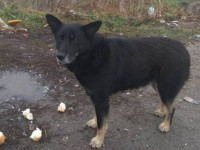 В Запорожской области пес дежурит на разобранном блокпосту