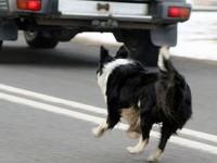 На запорожской трассе водитель влетел в бордюр, объезжая собаку