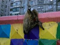 В запорожском дворе детскую площадку «украсили» головой оленя (Фото)