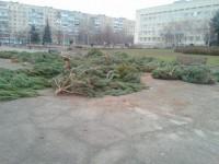 Фотофакт: в Запорожье  непроданные елки бросили возле райадминистрации