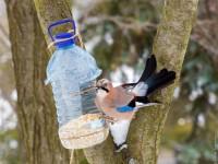 Запорожцы прошли 10 километров, чтобы покормить на Хортице птиц